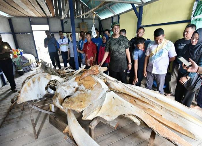 Bupati Bintan Apri Sujai saat melihat temuan tulang ikan raksasa di Tambelan