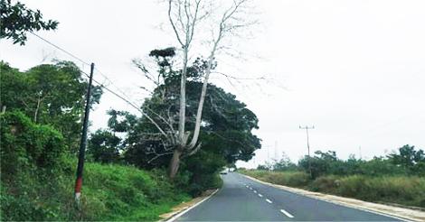 20200115_pohon-kering_02.jpg