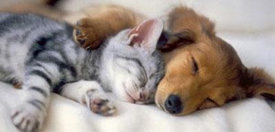 anjing-peluk-kucing.jpg