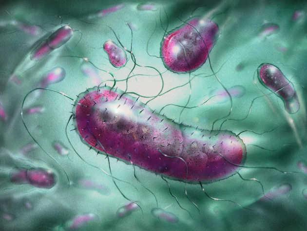 Fakta Menarik tentang Bakteri E-Coli