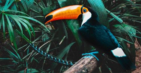 burung-toucan1.jpg