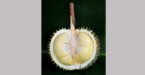 durian-kanyao.jpg