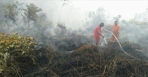hutan-terbakar1.jpg