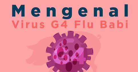 ilustrasi-flu-babi.jpg