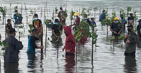jokowi_setokok-mangrove-04.jpg
