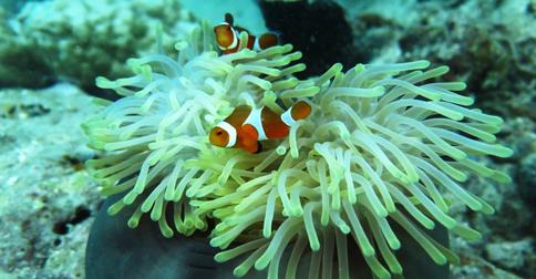 karang-anambas1.jpg