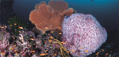 karang-pulau-bawah1.jpg