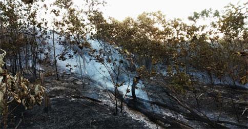 kebakaran-hutan-tanjungriau2.jpg