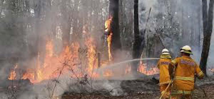 kebakaran_hutan1.jpg