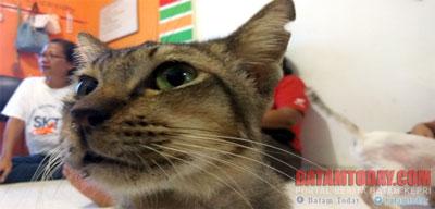 kucing1.jpg