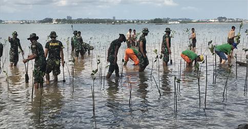 mangrove-sambau.jpg