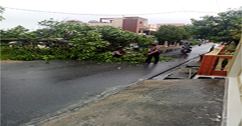 pohon_tumbang_karimun.jpg